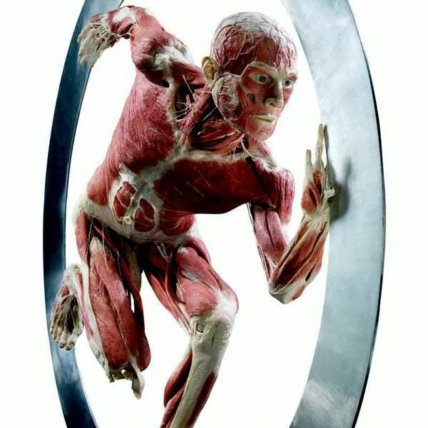 body worlds hagens cycle of life