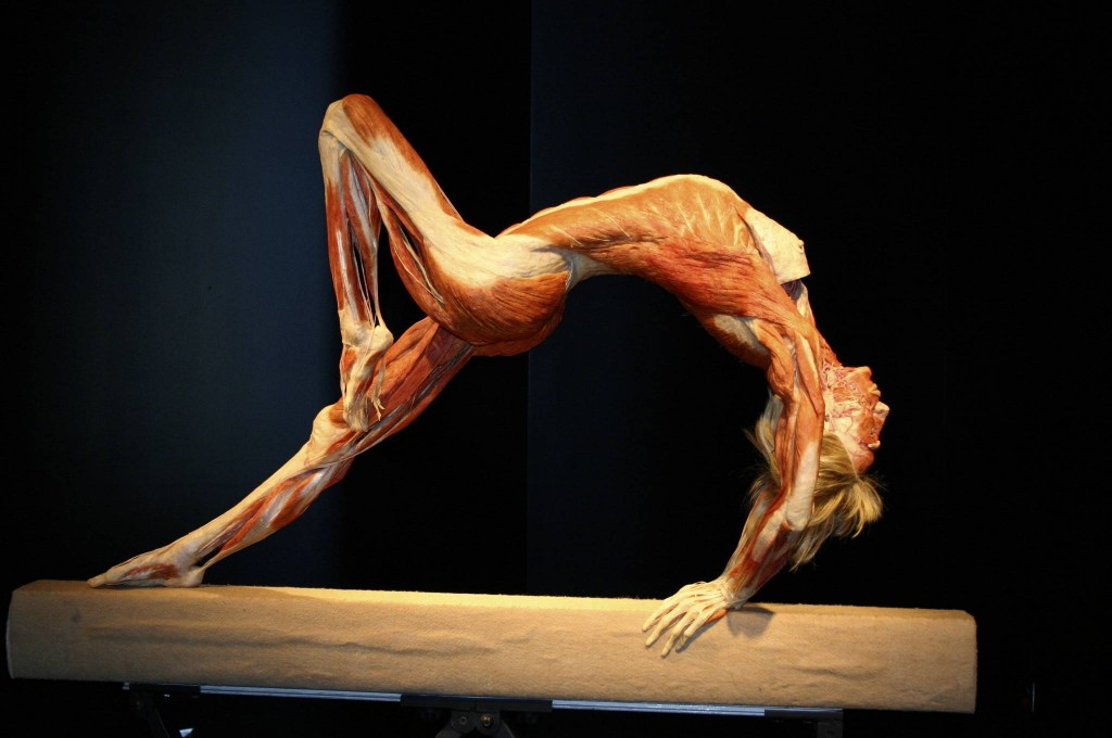 body worlds vital hagens